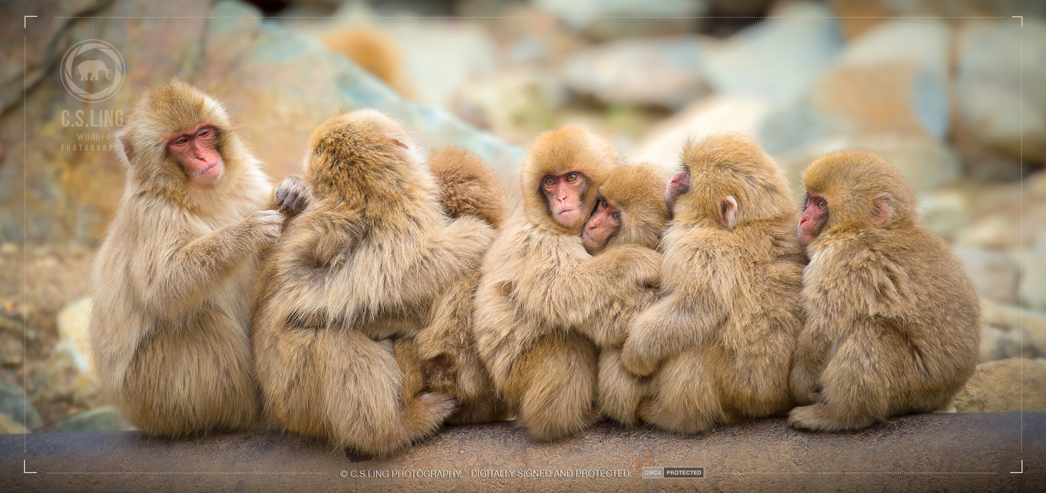 Photo: Snow Monkey Group Hug | Cute Animal Photos