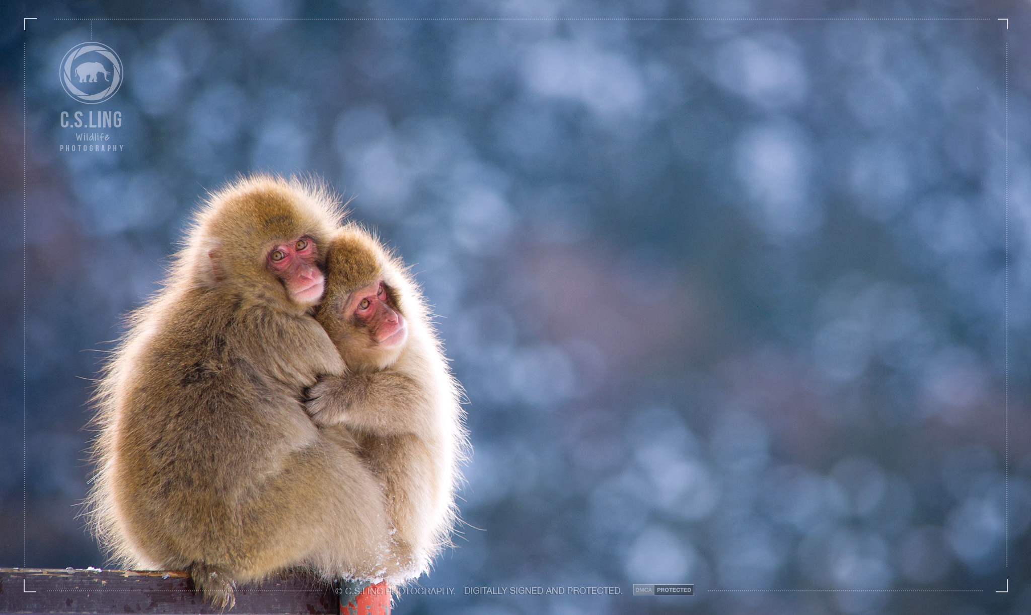 Snow Monkey Hug | Cute Wildlife Photos