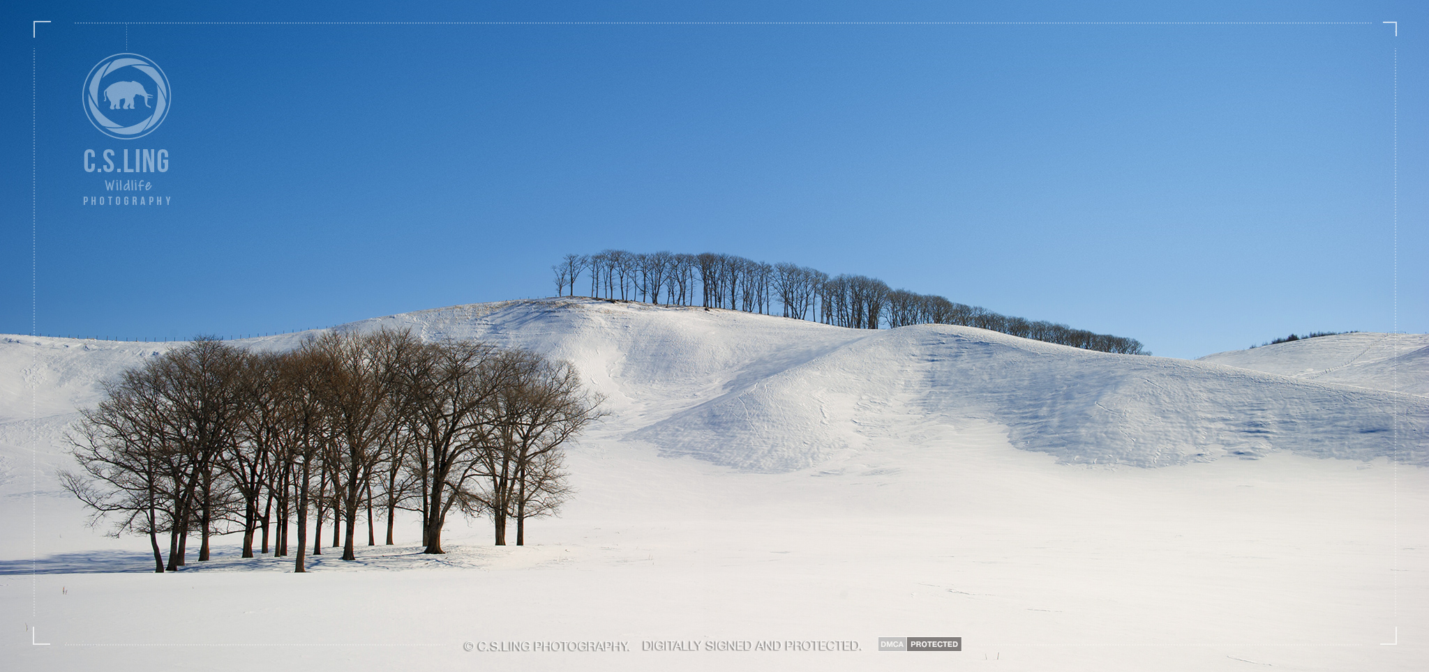 Japan Snow Landscape Photo by C.S.Ling